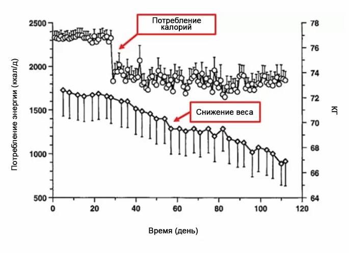 протеин при снижении веса белок