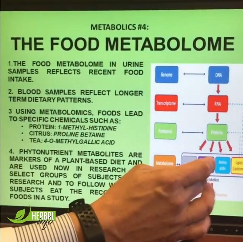 метаболизм доктор Дэвид Хибер