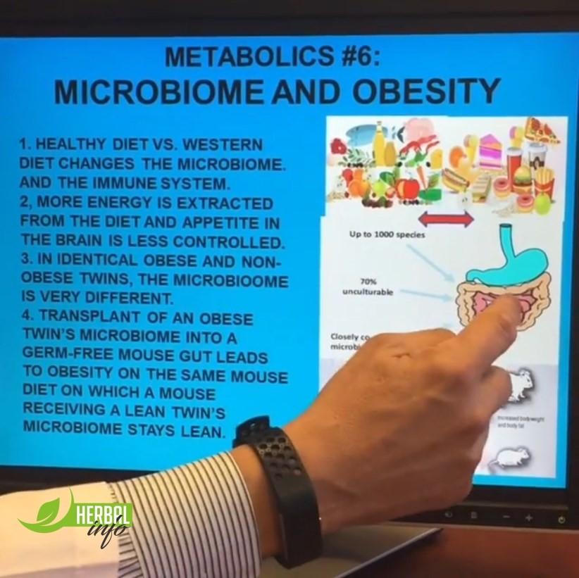 Микробиом и ожирение